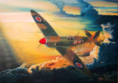 spitfire evelyn by tonkinson